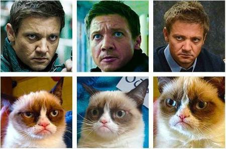 jeremy_renner_is_grumpy_cat-178720